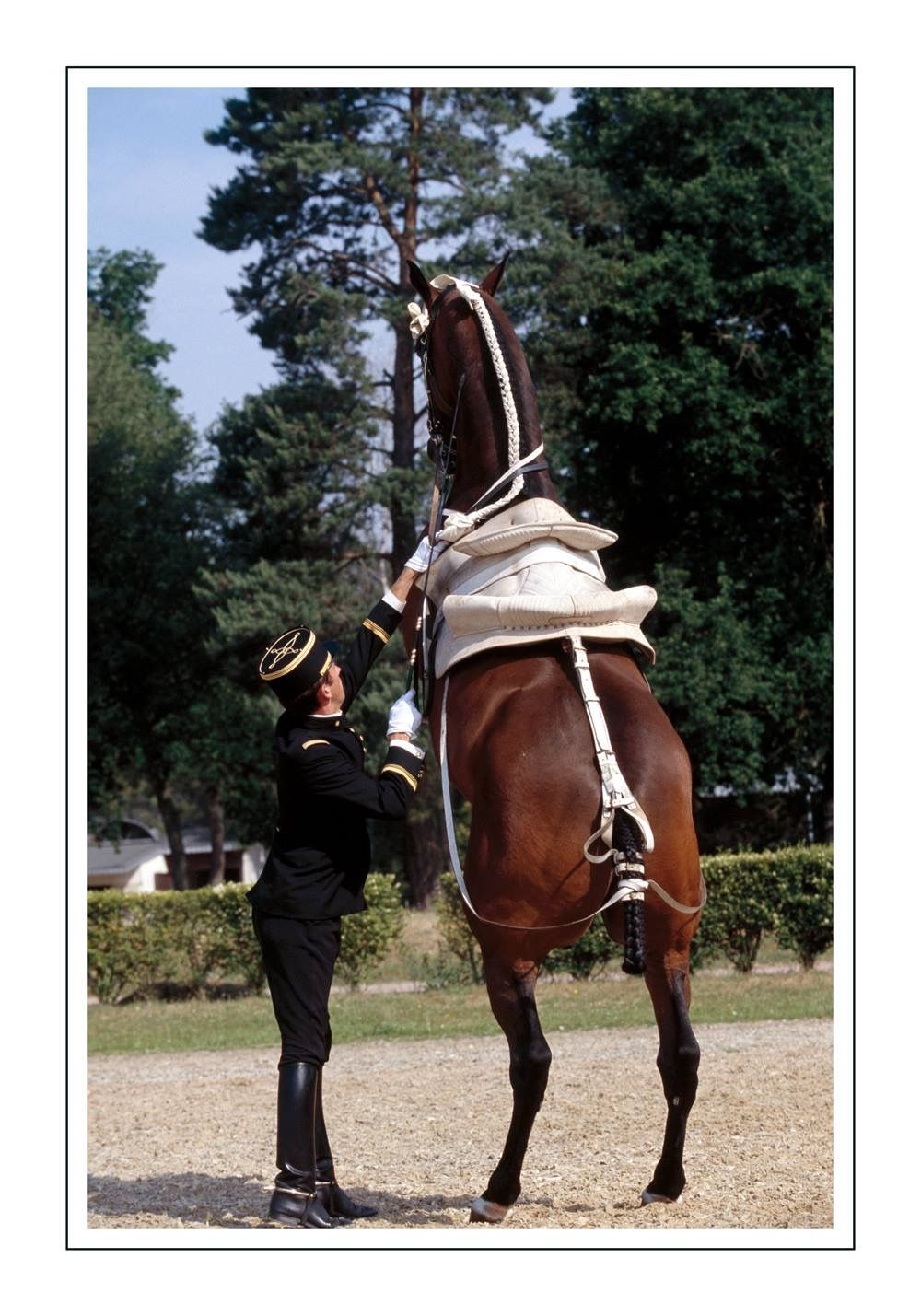 Pin By Lisa Brown On Equestrian Schools Horse Photography Horses Andalusian