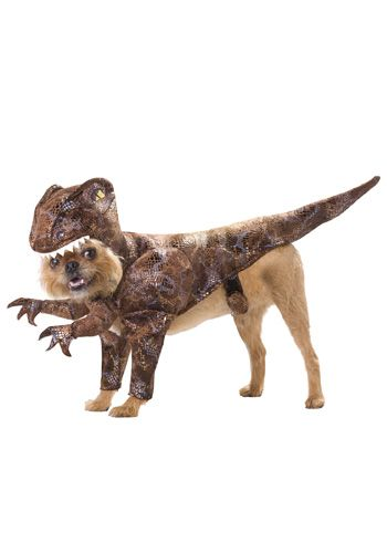 Pet Raptor Costume With Images Pet Halloween Costumes Dog