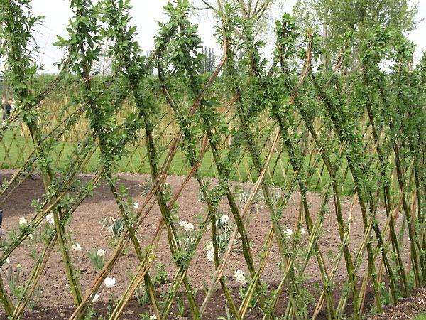 Selber Flechten Mit Weidenruten Bachlauf Garten Weiden Und Zaun