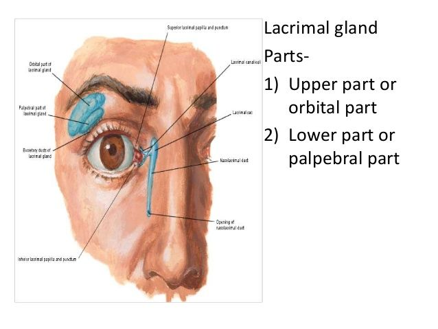 Image result for main lacrimal gland opthalmology pinterest image result for main lacrimal gland ccuart Images