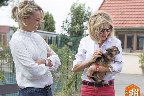 Brigitte Macron, aux côtés de Natacha Harry, lors d'une visite à la SPA cet été.