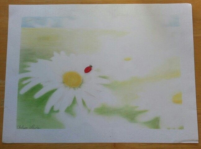 Daisies in the sun: color pencil drawing