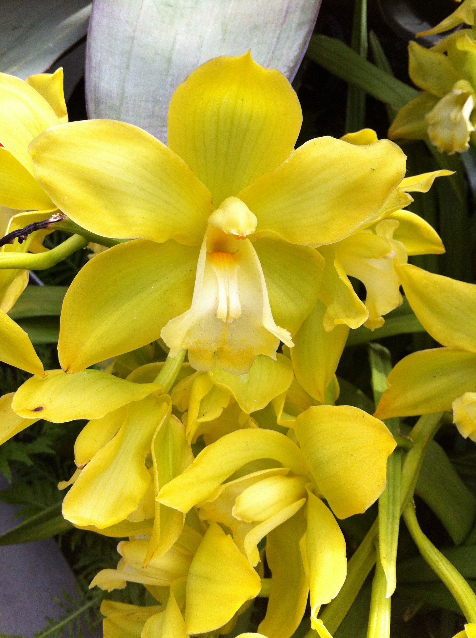 Yellow orchid mad for flowers pinterest yellow orchid and flowers