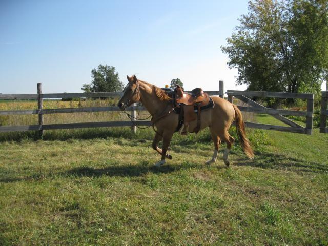 Quarter Horse Red Dun Gelding For Sale | Live The Dream ...