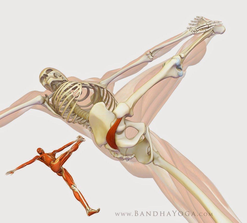 Hotornotviral: Healing With Yoga: Piriformis Syndrome