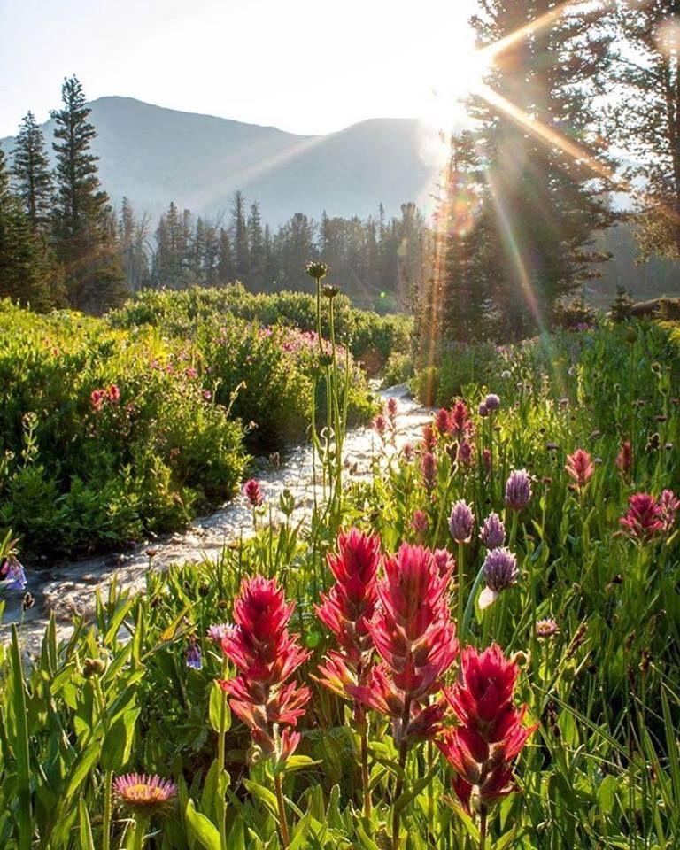 Springtime In Montana Montana Landscape Spring Landscape Spring Landscape Photos