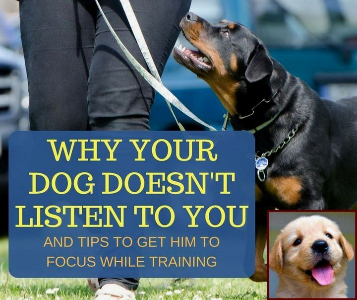 House Training Puppy Fake Grass And Clicker Training Dogs Books
