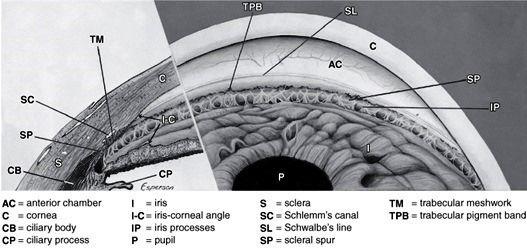 Anatomy Of Anterior Chamber Angle Seen On Gonioscopy Google Search