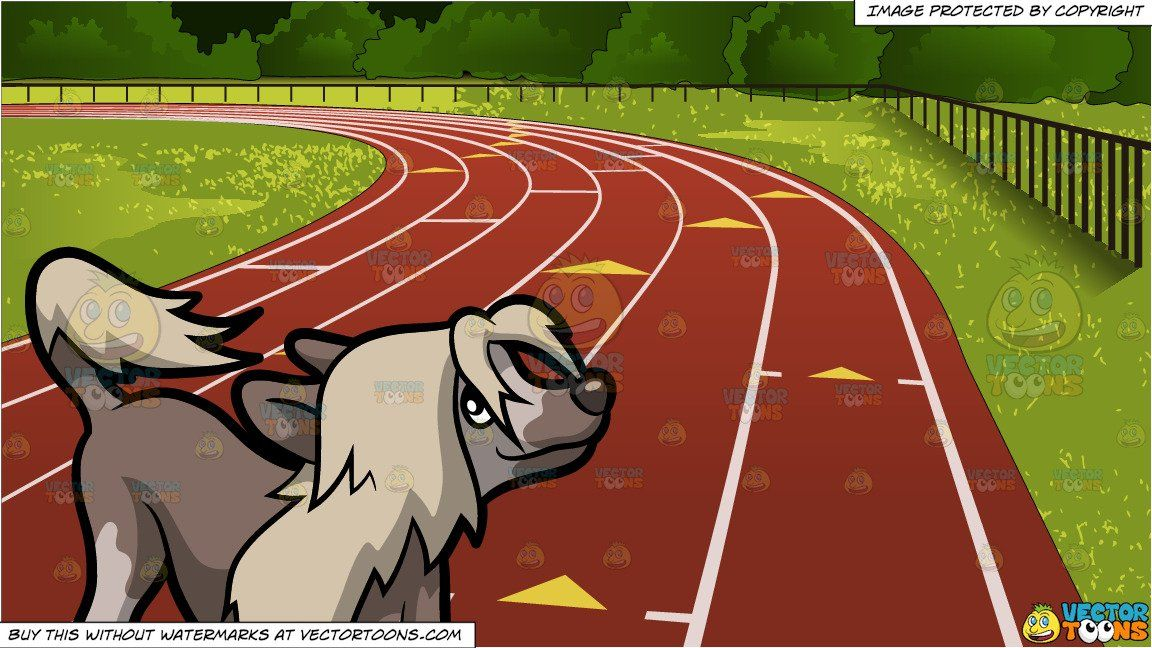 an excited chinese crested dog and outdoor running track background