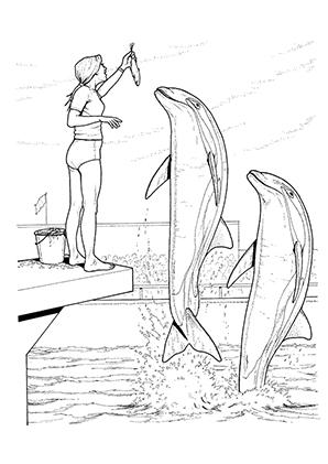Ausmalbild Delphine In Einer Delphinshow Zum Kostenlosen Ausdrucken Und Ausmalen Ausmalbilder Ausmalbi Malvorlagen Fur Kinder Ausmalen Ausmalbilder Tiere