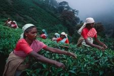 Agriculture | Steve McCurry