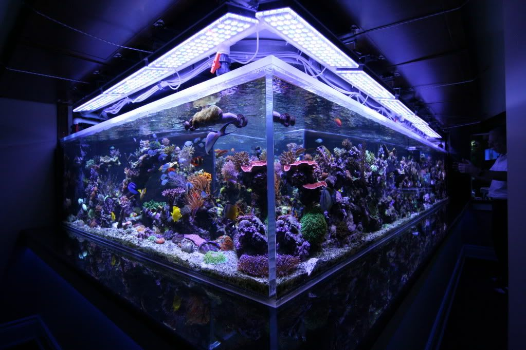 Saltwater Tank mixed reef 1350 gal Orphek LED Lighting PAR values range from 650 near the surface to 450 in the middle and 300 . & 1300G Reef Aquarium Led Lighting Orphek | Reef Aquariums ... azcodes.com