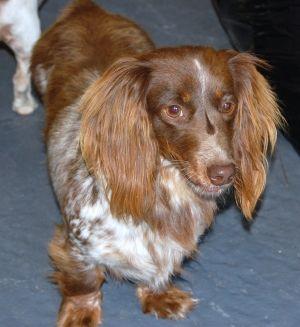 Loladach Kennel Com Dachshund Pets Animals