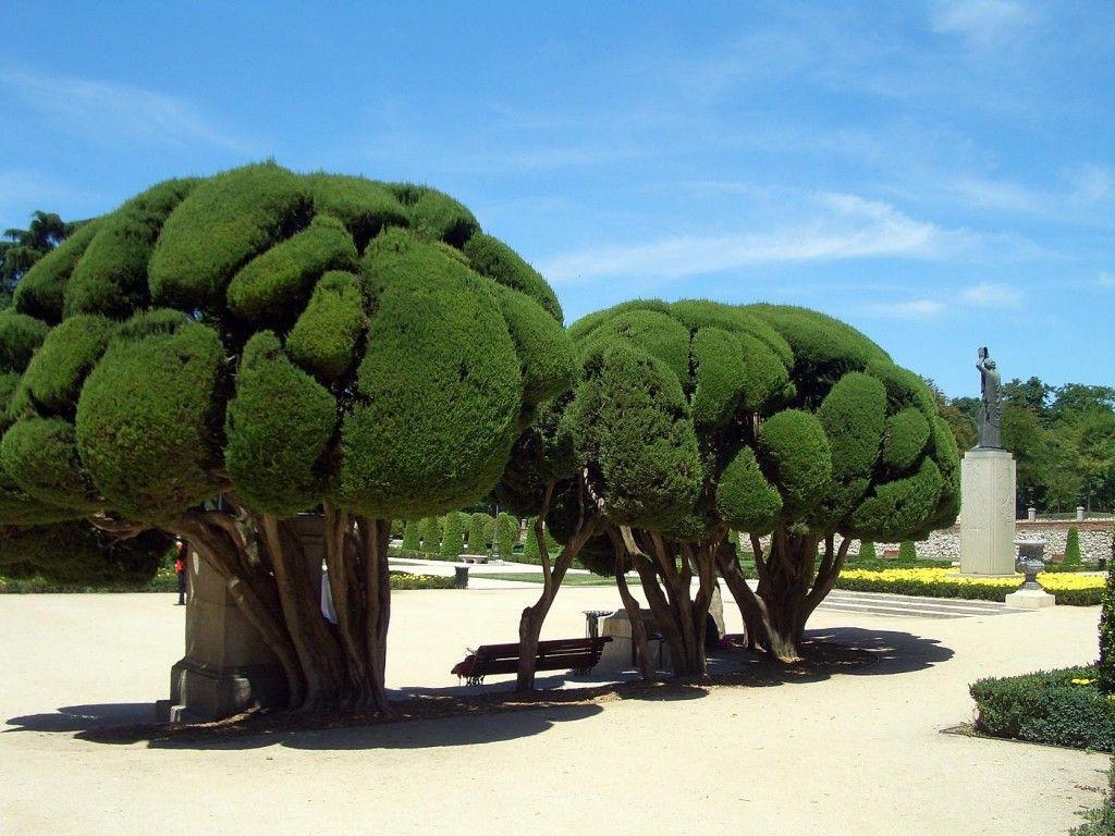 фото красивых необычных деревьев последнее время