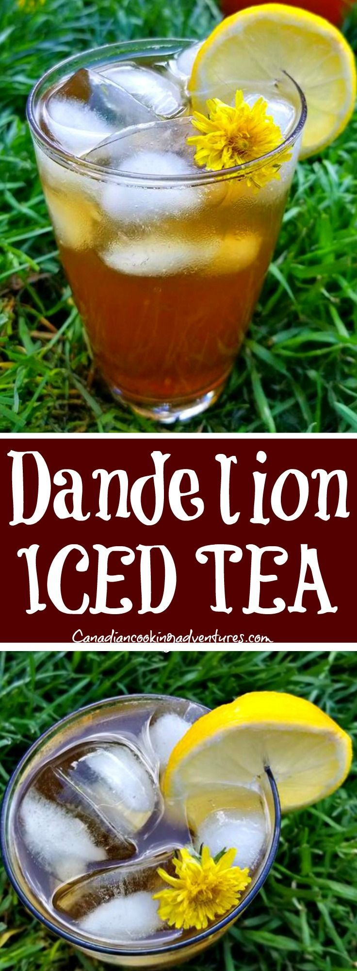 Dandelion Iced Tea Dandelion Iced Tea is the new Super Beverage