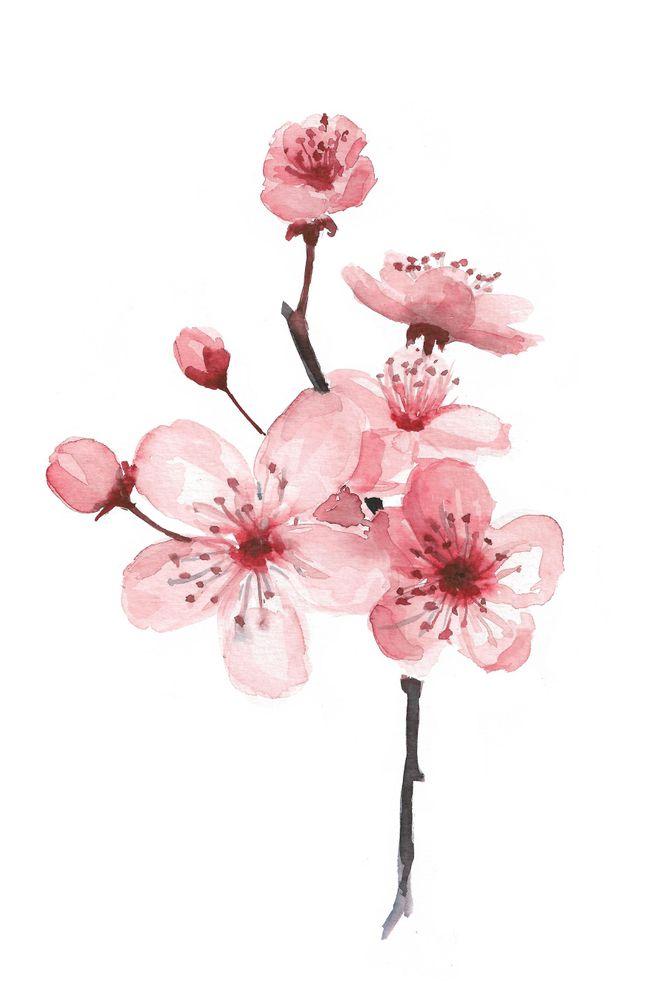 Pin By Juwon Lee On Watercolors Cherry Blossom Watercolor Cherry Blossom Painting Cherry Blossom Art