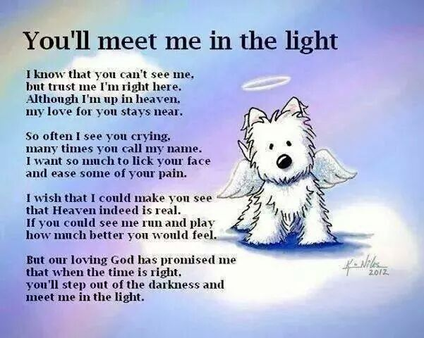 Pin By Karin Louweren On Crazy Cute Animals Pinterest Animal Stunning Dog Loss Quotes
