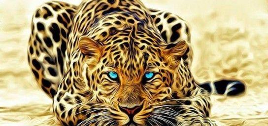 الفهد الصياد اسرع المخلوقات دنيا الأطفال Animals Wild Cats Animals Wild