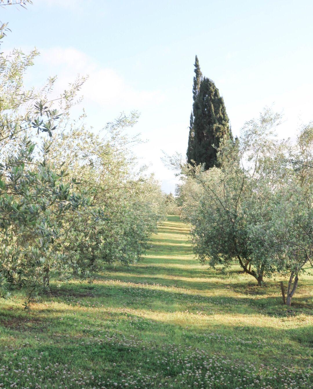 Olive Mediterranean Olive Orchard Picnic Maui