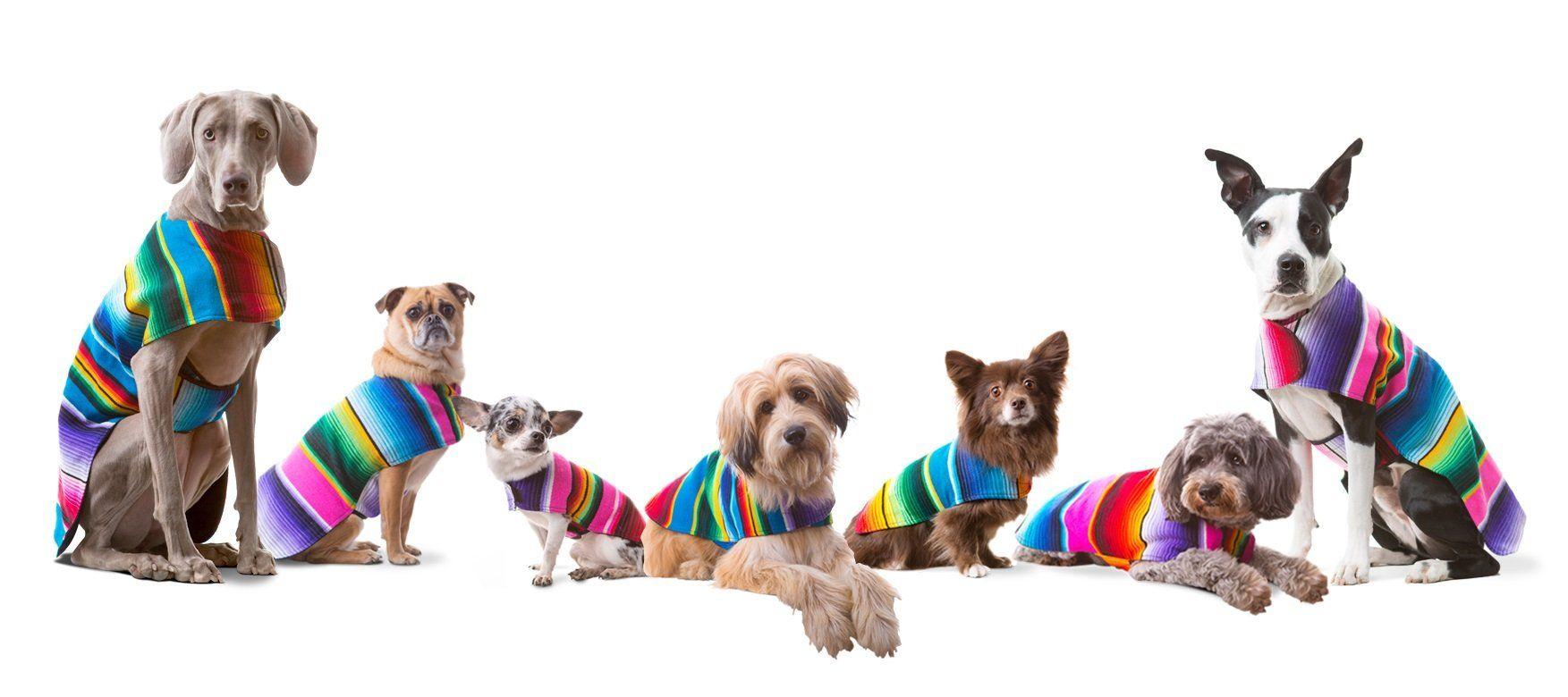 Baja ponchos dog clothes handmade dog poncho from
