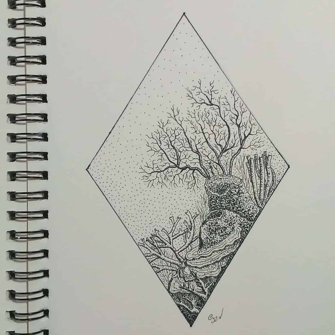 Coral Reef Ink Pen 12x18 Coral Art Coral Reef Drawing Coral Tattoo