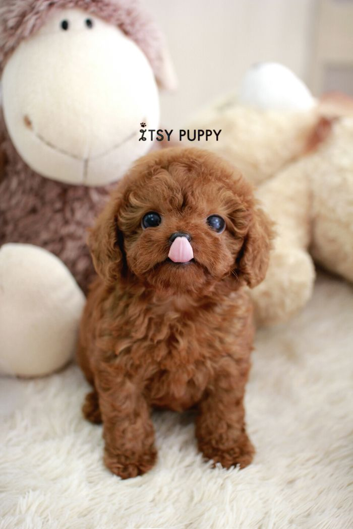 Http Www Itsypuppy Com Wp Content Uploads 2014 08 1408721329322