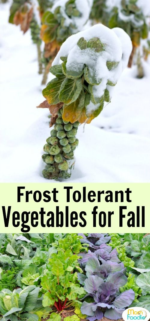 13 Frost Tolerant Vegetables Fall Vegetables To Plant 640 x 480