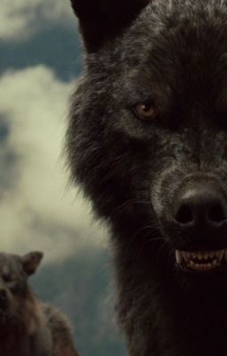 Im Auge meines Wolfes (Sam Uley FF) | Riley Hale in 2019
