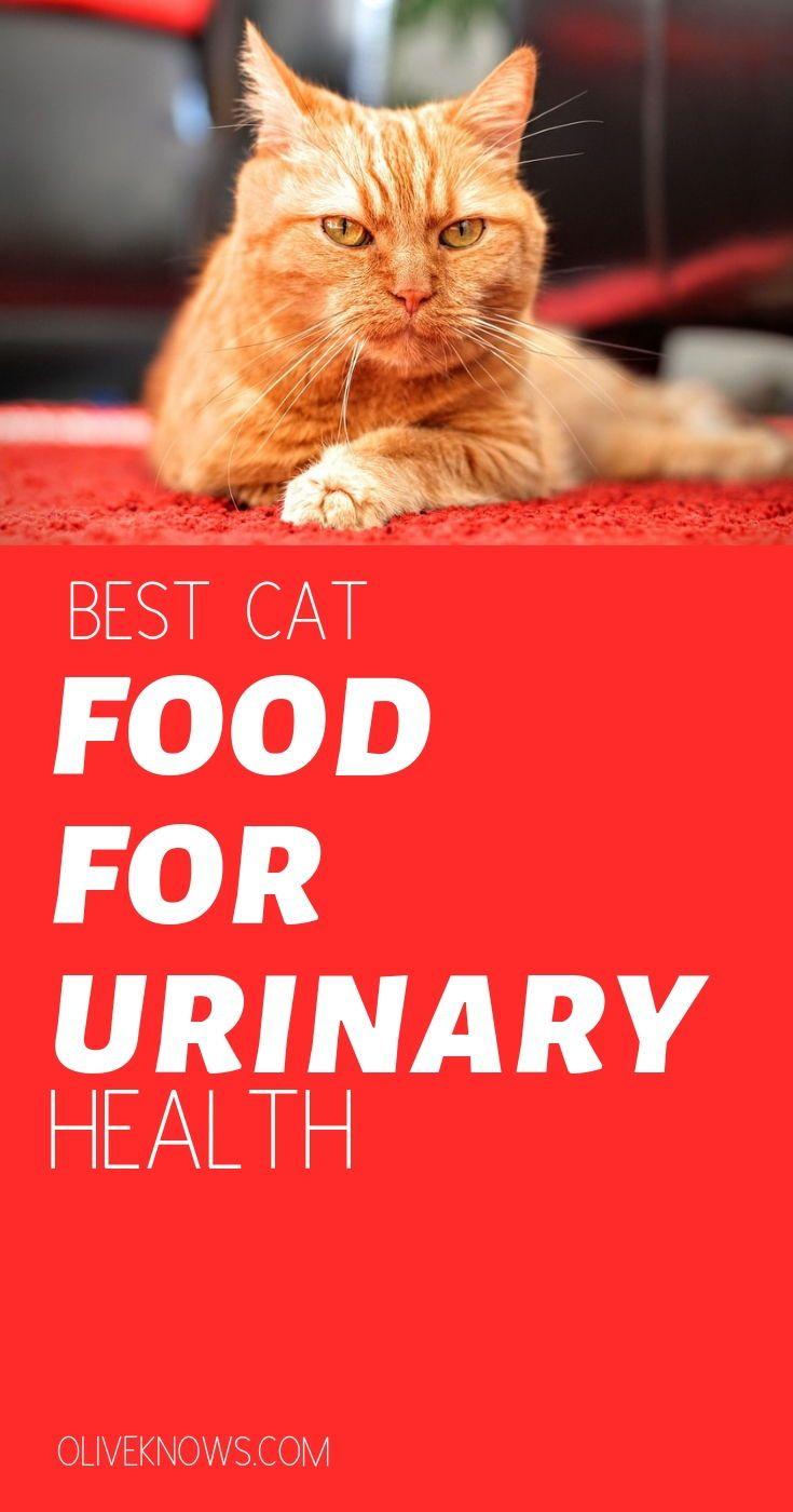 diabetic cat food dry