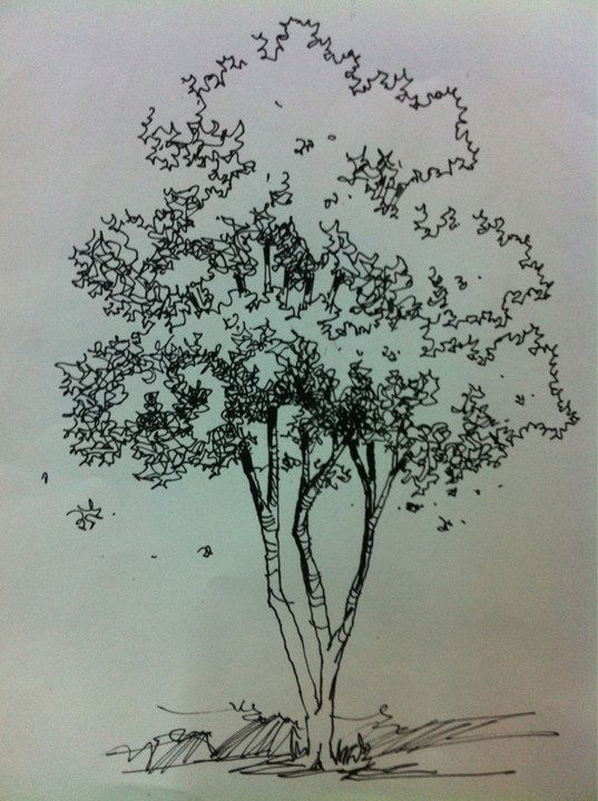 Architecture Drawing Of Trees tree renderings | hand renderings | pinterest | sketches, drawings