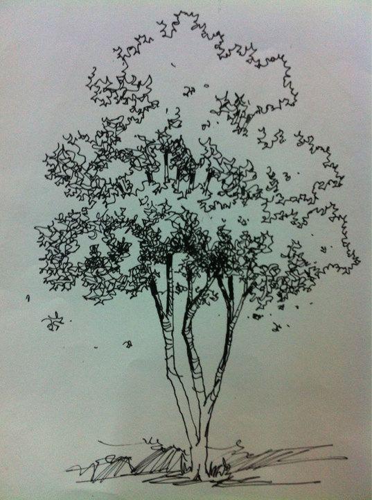 手绘基础训练 包含体块 植物 材质 其它单体元素集合 人人分享 人人网 Landscape Sketch Tree Sketches Architecture Sketch