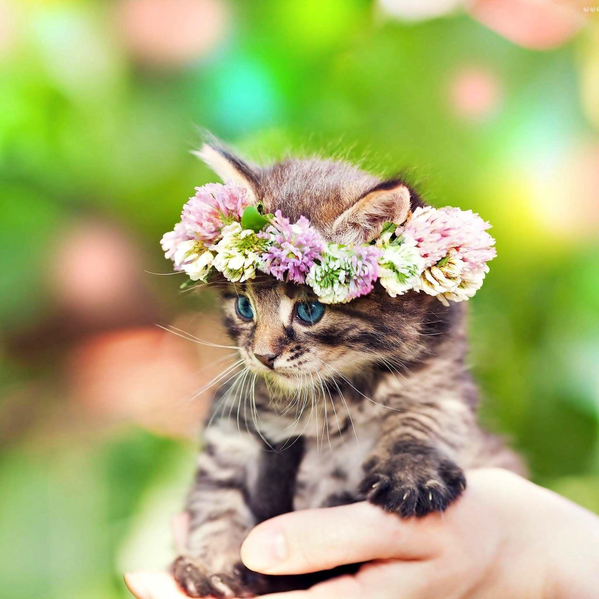 Cute Cat Tiere Baby Katzen Katzen
