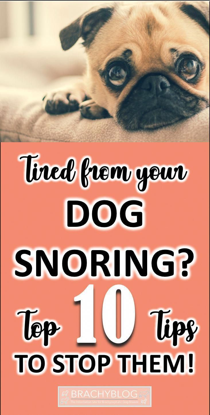 Get Your Pet To Become More Obedient With Your Dog Training Tips