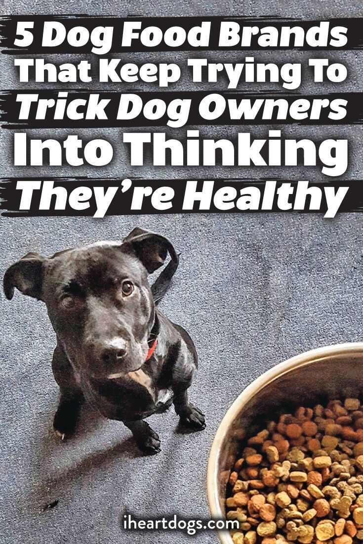 7 Reasons Why So Many People Are Switching Their Dogs To A Raw Diet