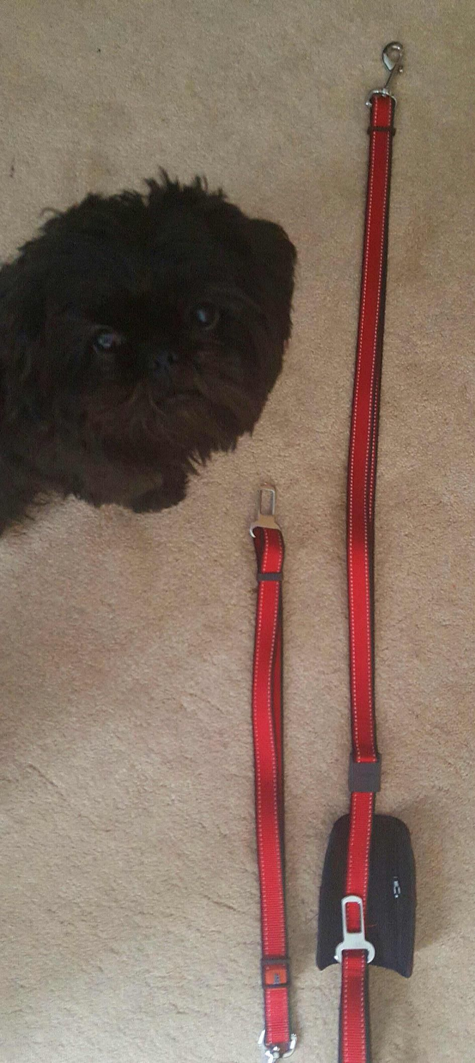 Amazon Customer Reviews Two Dog Seat Belt Leashes No1. Customer Reviews Dog Seat Belt Premium Adjustable Reflective Pet Leashes Pocket With Zipper For Waste Bags Leash Gellike Padded Handle Safety. Seat. Seat Belt Harness Zipper At Scoala.co