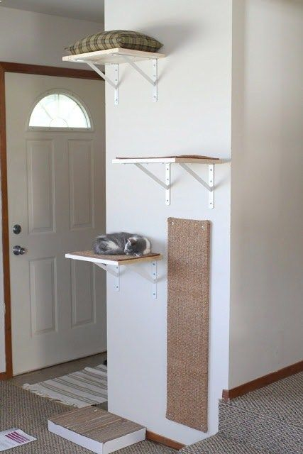 Shelves for Happy Active Kittens. Love this scratching post on the wall.