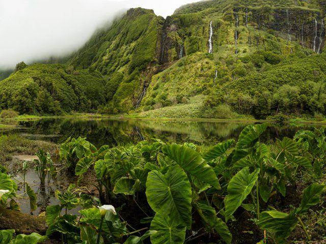 Lush Landscape, Azores, Portugal - Webshots