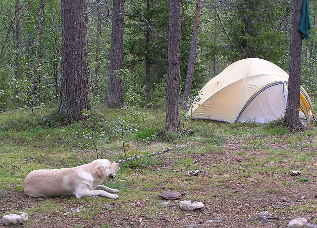 Hunting Tents The C&ersu0027 Best Friend & Hunting Tents: The Campersu0027 Best Friend | Myfoodforu | Pinterest ...