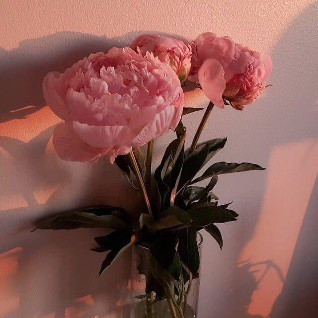V E L V E T | ВКонтакте в 2020 г | Цветочные фоны, Розовые ...