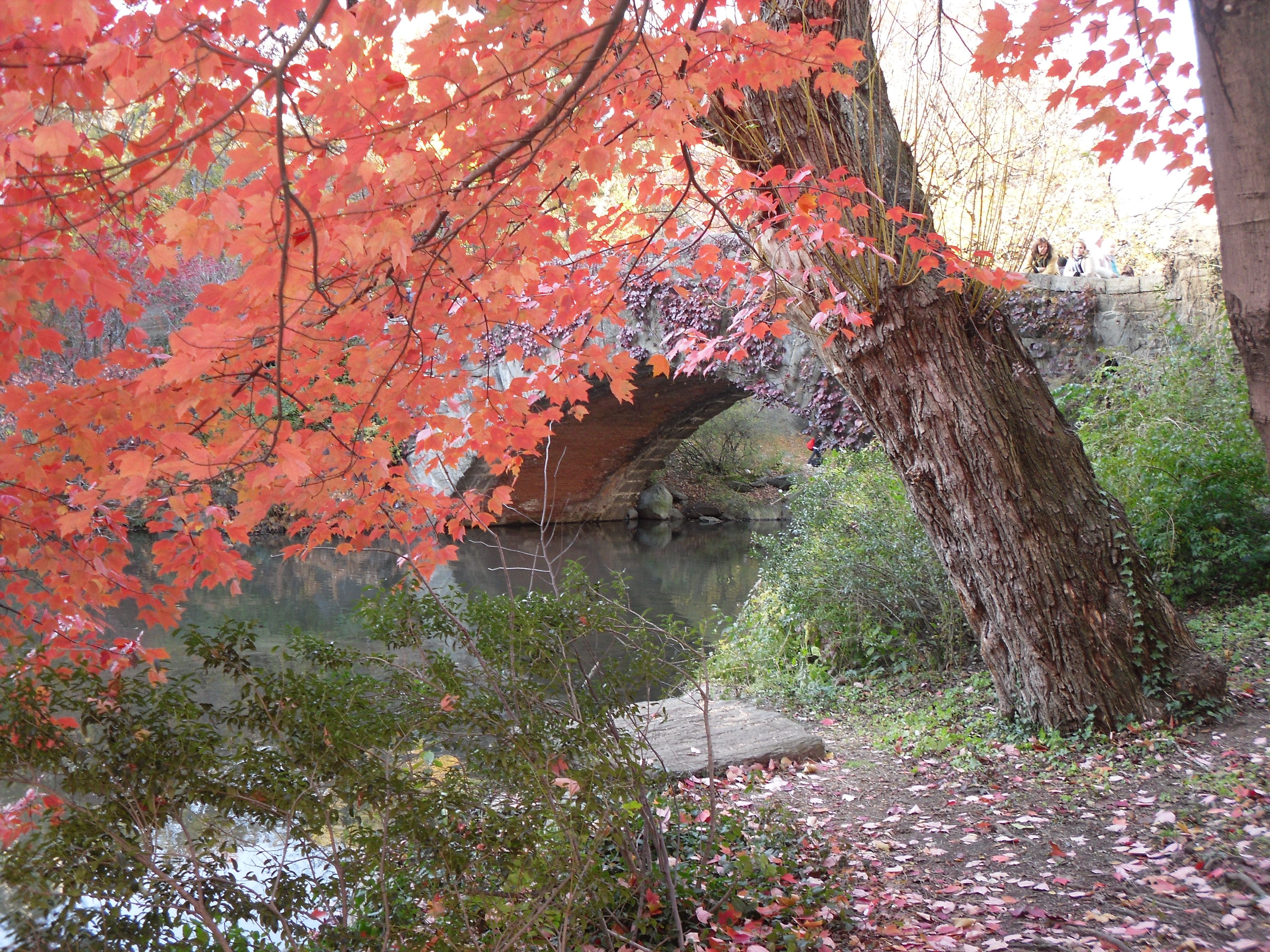 My day in Central Park in all it's Autumn beauty No.1
