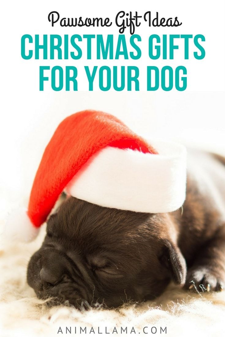Best Christmas Gifts for Dogs: Gift Ideas for 2017 | Gifts ideas ...