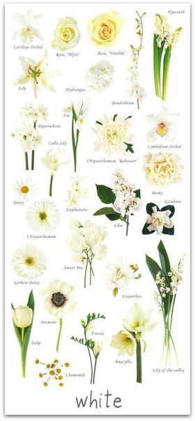 sasha pecherytsya pinterest have you ever found a picture of a bouquet and wondered what is that flower here is a collection of flower names sorted by color mightylinksfo