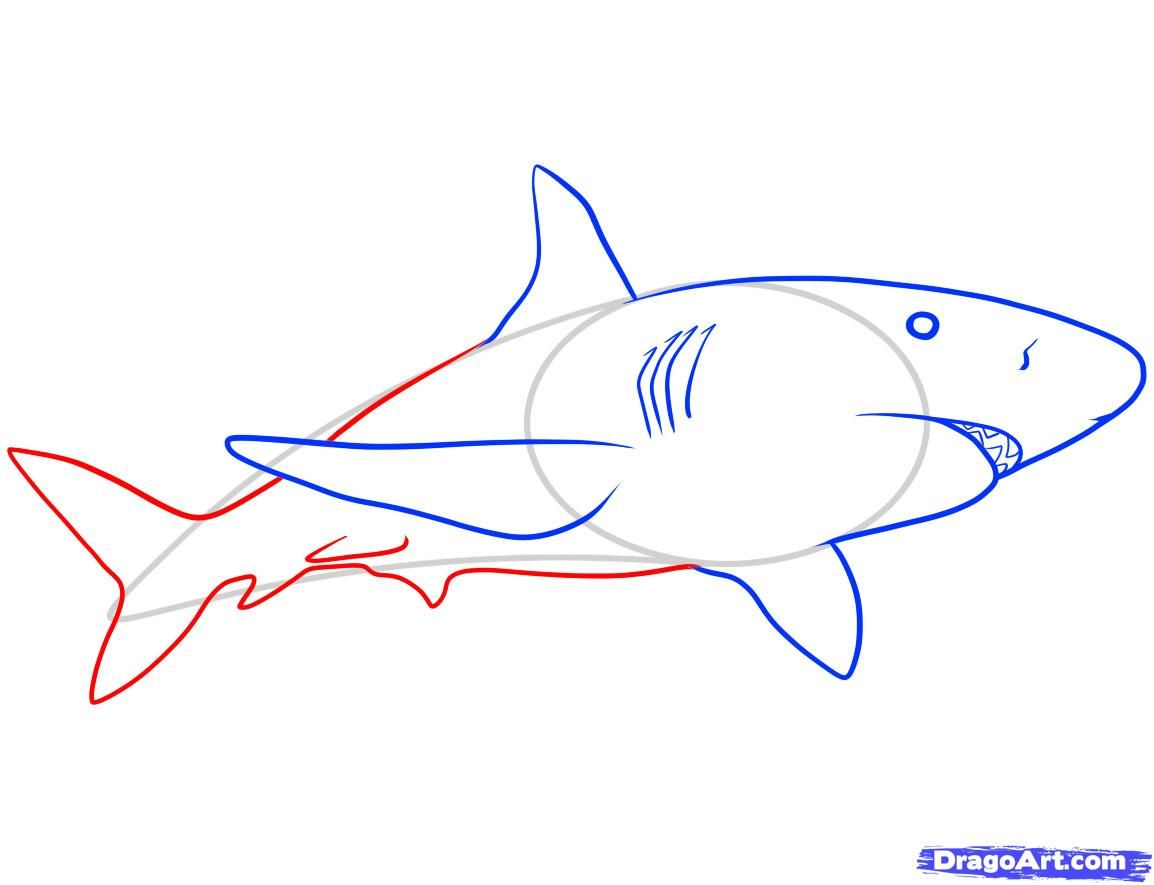 торговых магазинов акулы рисунки легкие яркие фото португалии