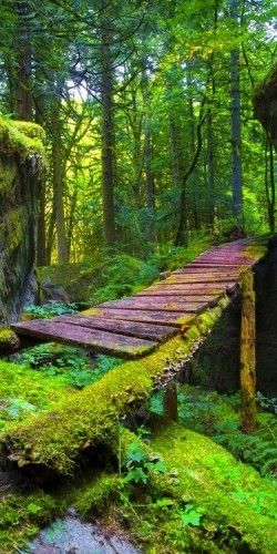 Old Forest Bridge with moss, Hope, British Columbia