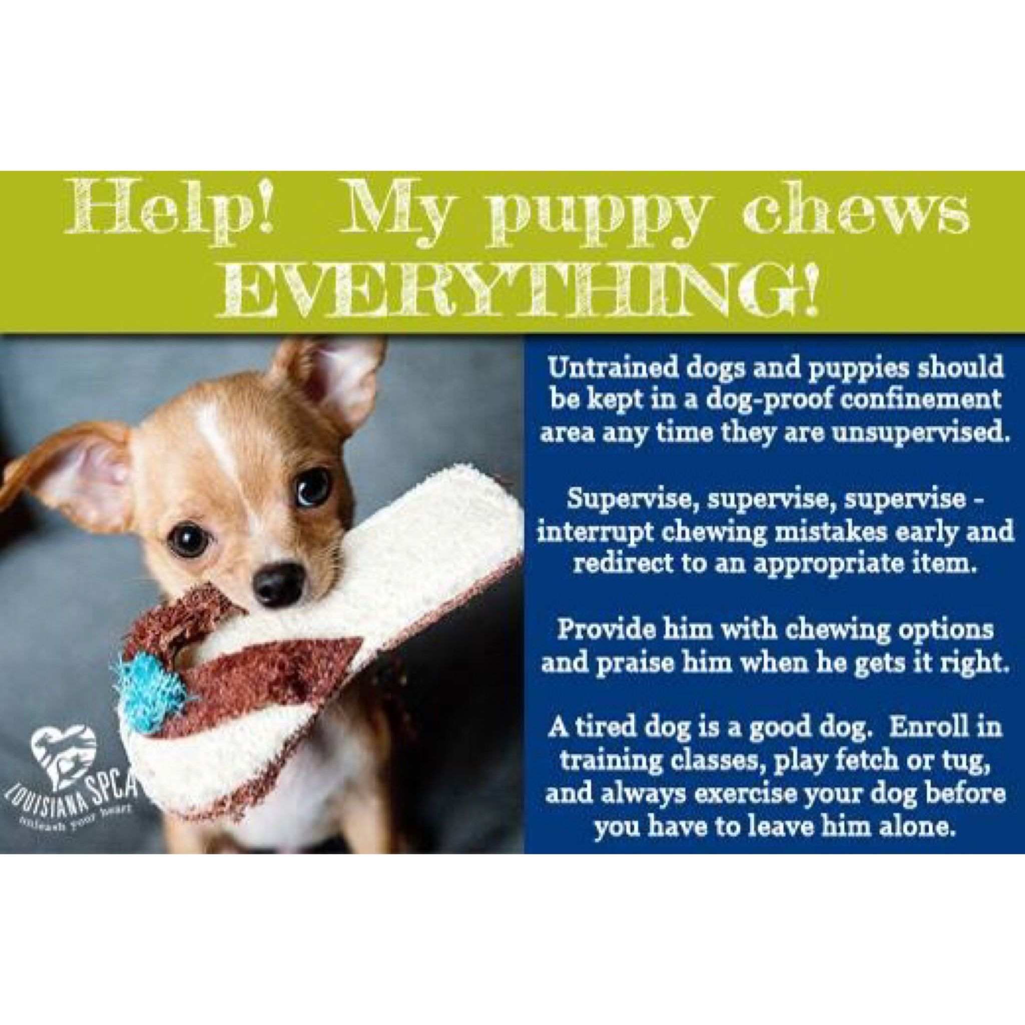 Does This Sound Familiar Fun Facts About Animals Dogs Puppies