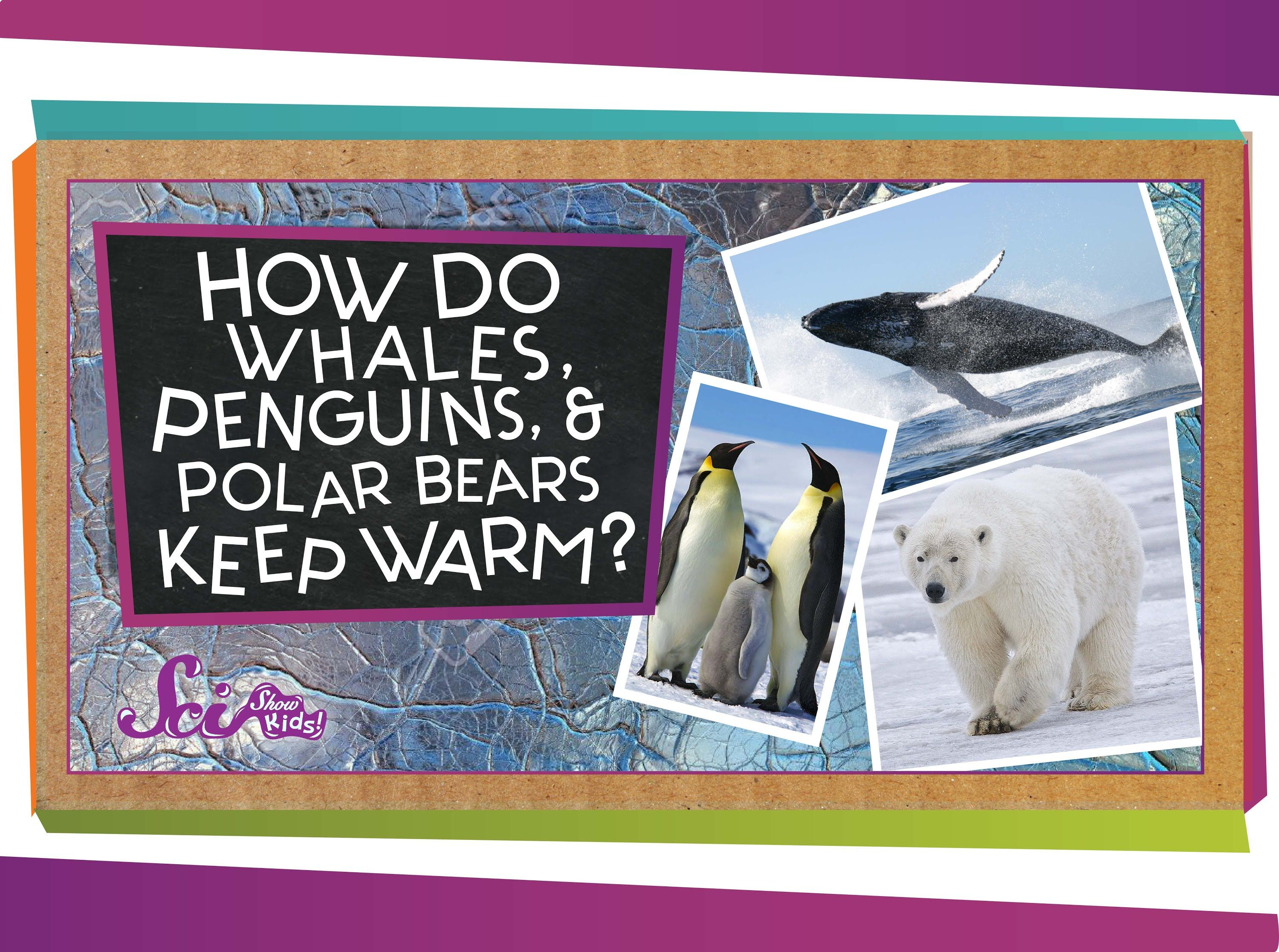 Have You Ever Wondered How Animals Can Live In Super Cold Places