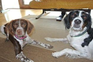 犬の首輪とリード しあわせカラー  http://www.shiawasecollar.com/