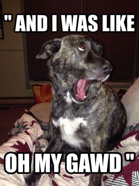 Funny Dog #Gawd, #Like