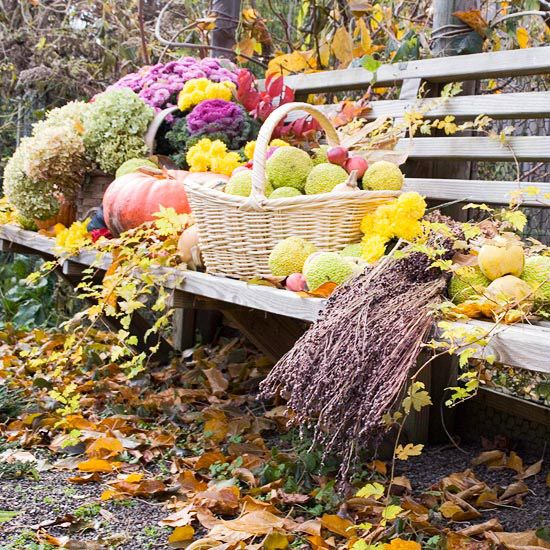 Ultimate Guide To Fall Winter Gardening: Everything You Need To Know About Caring For Fall Mums
