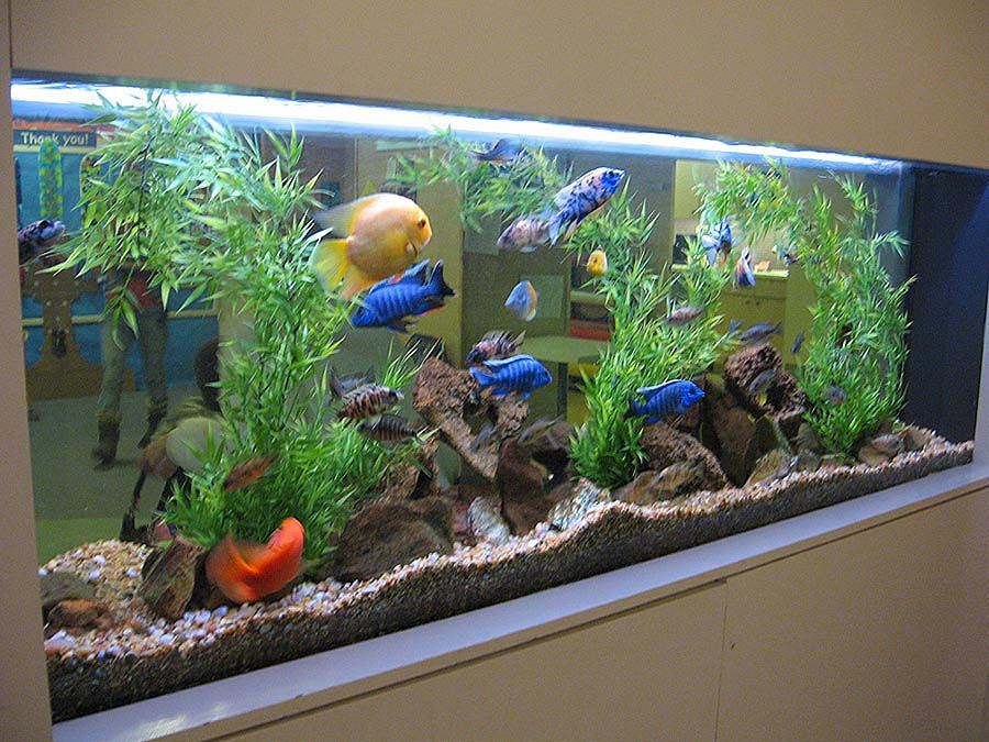 Another Fresh Water Aquarium By Aquaholics Fish Tank Themes Tropical Fish Tanks Fish Tank Decorations